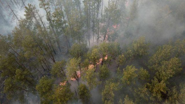 Firefighters tackle forest fires near Chernobyl that caused radiation levels to rise