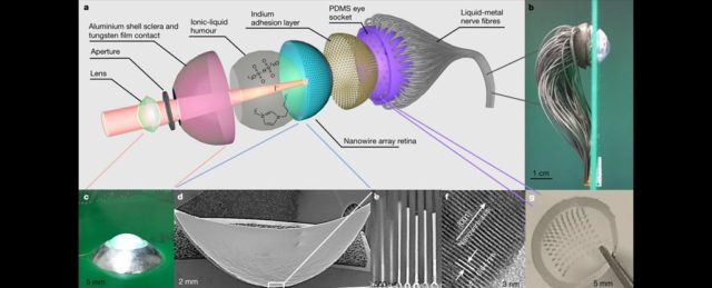 Scientists Reveal a Proof-of-Concept Bionic Human Eye