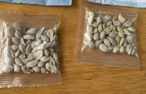 Amazon bans foreign seed sales in the US, after mystery packages sent to households