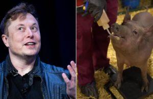 Elon Musk's Neuralink brain chip could do wonders for animal testing and neuroscience
